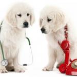 Állatorvosi ügyelet – Sárbogárd